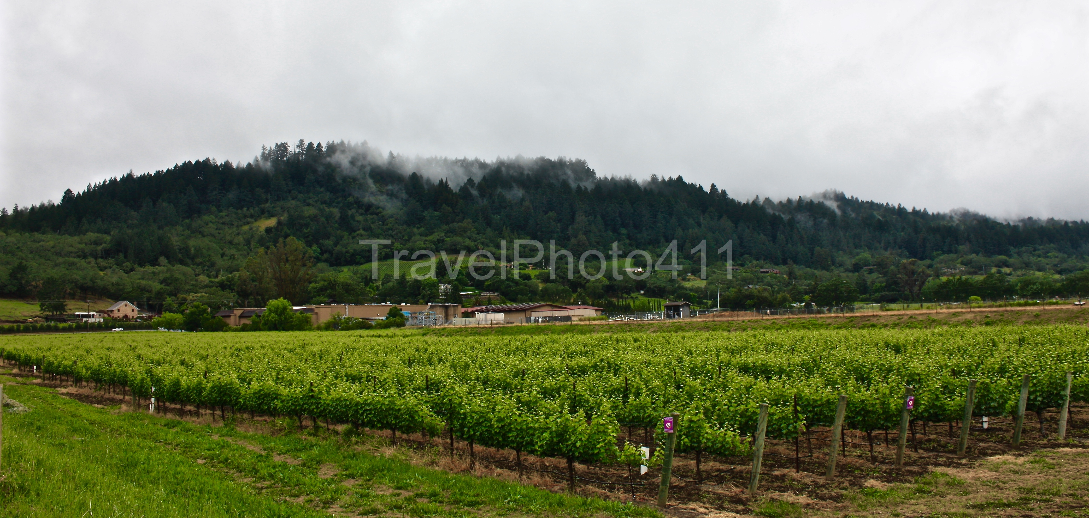 Napa Winery